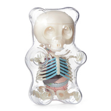 4D MASTER STEM Anatomy Model Gummi Bear Skeleton Anime Figure Adults Kids Gifts Science Animal Model