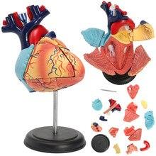 4D Разобранная анатомическая модель сердца человека анатомия медицинская школа образовательный обучающий инструмент анатомическая модель сердца человека Новая