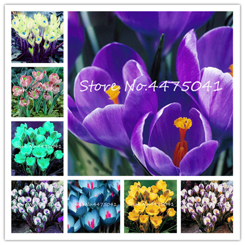 top 10 most popular crocus brands and get free shipping - 8hakh562
