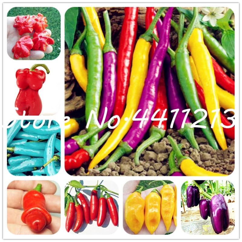 200 Pcs Vegetable Fruit Pepper Bonsai, Giant Chili Plants + Sweet Pepper + Carolina Reaper