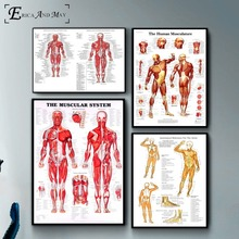 Human Body Muscular System Poster And Print Canvas Art Painting Wall Pictures For Living Room Decoration Home Decor No Framed