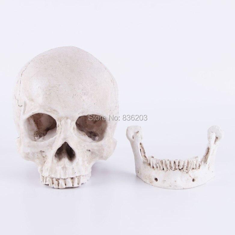 Human Skull Resin Replica Medical Model Lifesize Anatomy Skeleton