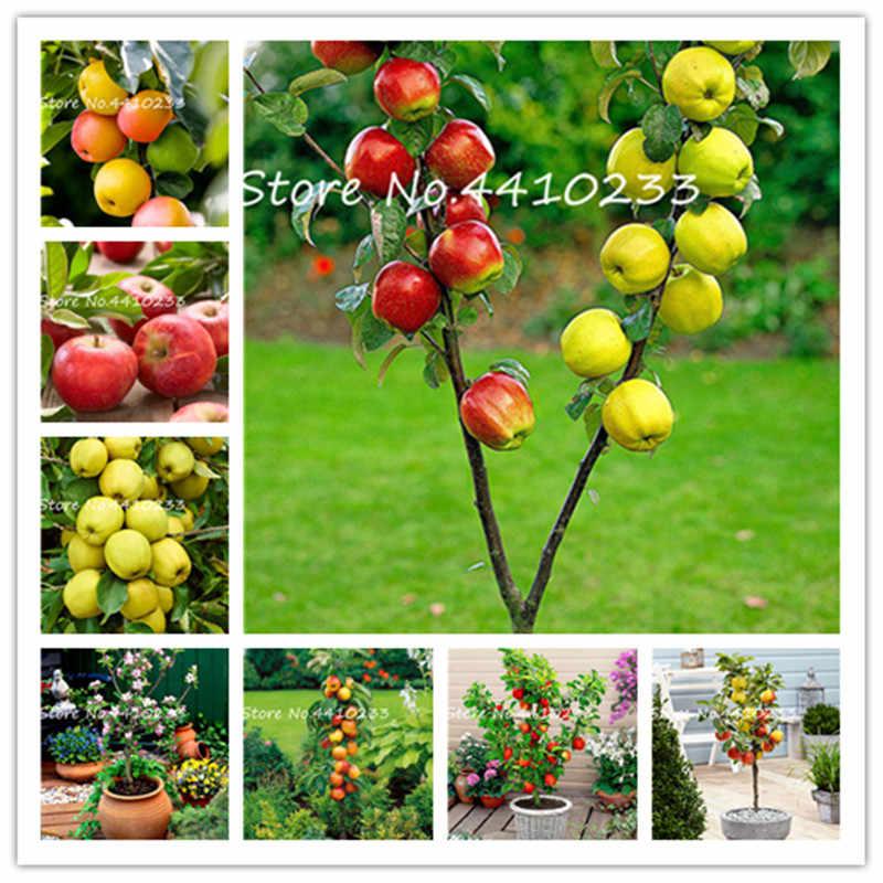 30 шт яблоко бонсай, сладкие фрукты, технология бонзаи дерево натуральное вкусное четырехсезонное севание редких зеленых фруктов горшечных растений здоровые Ga