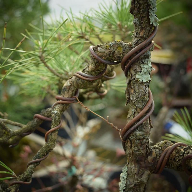 Black Bonsai Aluminum Training Wires Gardening Supplies Decorative Accessories Roll Set Bonsai Tools Garden Supplies(China)