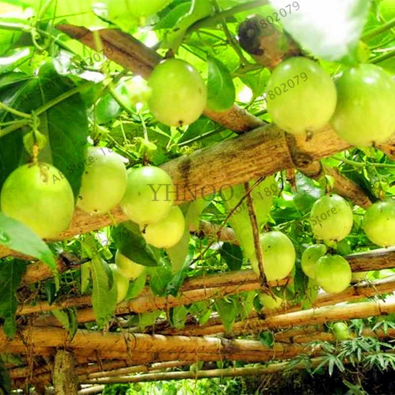 20 шт./пакет Страсть фрукты (Пассифлора эдулис) растения, редкие тропические и субтропические фрукты Плодовое дерево натуральные фрукты бонсай для домашнее растение