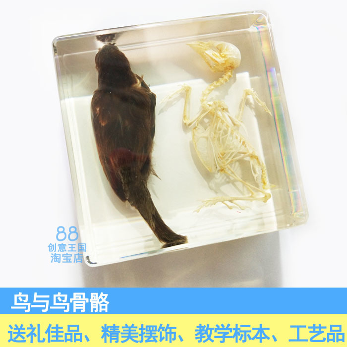 Bird And Bird Bones Animal Specimen Artificial Amber Paperweight Resin Arts And Crafts Gift Teaching Articles