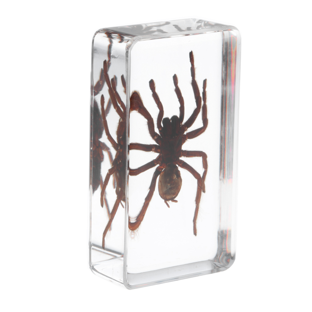 Real Insect Black Spider Specimen Encased In Resin School Educational Teaching Aid Great Collection Gift For Kids & Adults