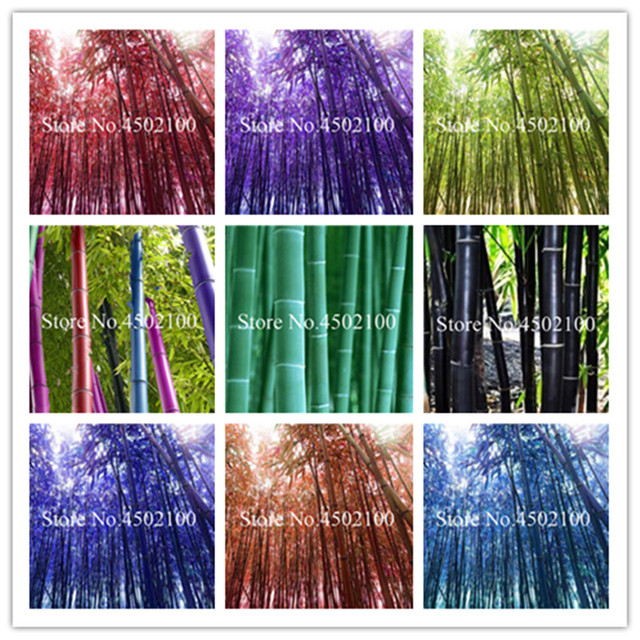 Nuovo Colorato Di Bambù Bonsai 50 pz Bonsai Moso All'aperto Albero Pianta Per La