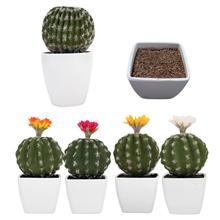 886456e47 Alta simulación de la planta verde DIY creativo de Cactus suculentas en  maceta de Bonsai sin