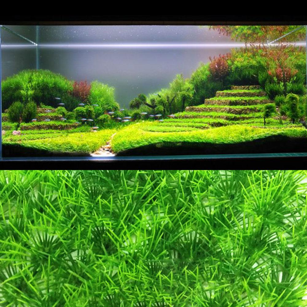 Aquarium Plant Fine Pine Needle Lawn Easy Growing Aquarium Water Plant Grass Seed Fish Tank Lawn Decor(China)