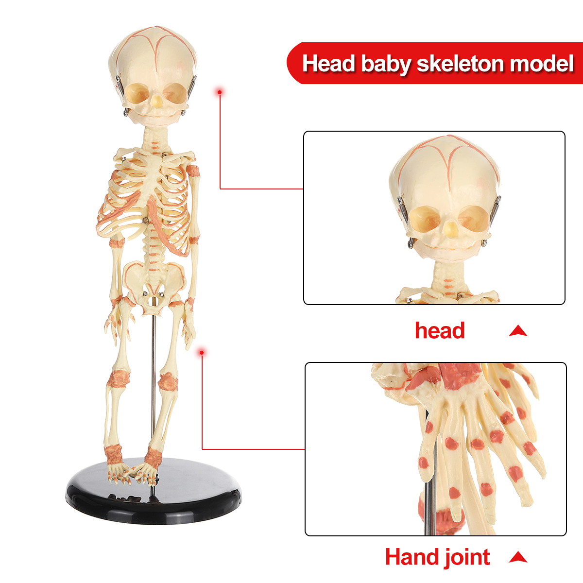 36cm Human Baby Anatomy Skull Skeleton Anatomical Brain Skeleton Specimen Halloween Prop Horror  Medical Model PVC