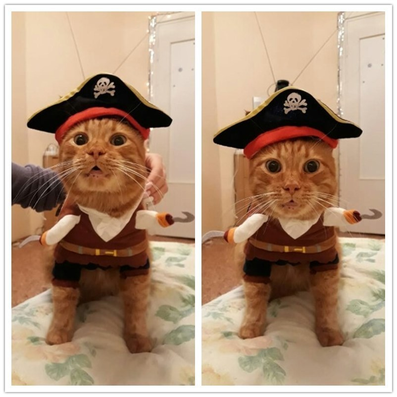 0d28ac922e3a7 Funny Cat Clothes Costume Sex Nurse Policeman Suit Clothing For Cat Cool  Halloween Costume Pet Clothes Suit For Cat XS 2XL 27S1-in Cat Clothing from  Home ...