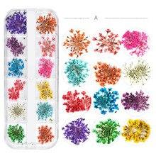Nail Art Sticker Decals Real Flowers Ornaments Gypsophila Sun Flower Daisy 12 Color Dried 1 Box Diy