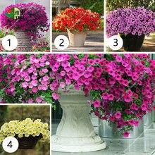 Hanging Petunia bonsai rare variety hardy Very Beautiful Garden Flowers Light Up Your 100pcs/bag