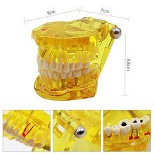1 шт. Стоматологическая модель зубов, обучающая модель зубных зубов, модель имплантации зубов, Съемные Инструменты для обучения, оборудование