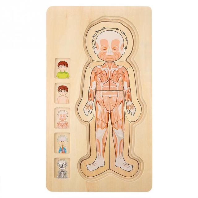 Wooden-Kids-Puzzle-Toys-Human-Body-Structure-Multilayer-Brick-Toy-Child-Early-Educational-Intelligent-Learning-Cognition