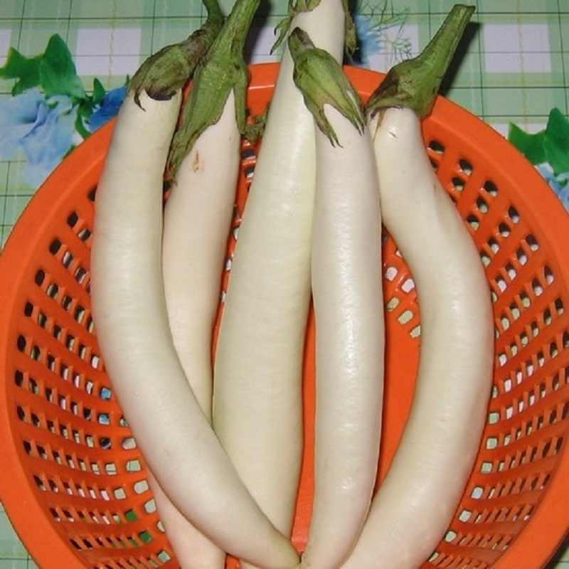 Kar beyaz beslenme sebze bonsai patlıcan bonsai 100 adet