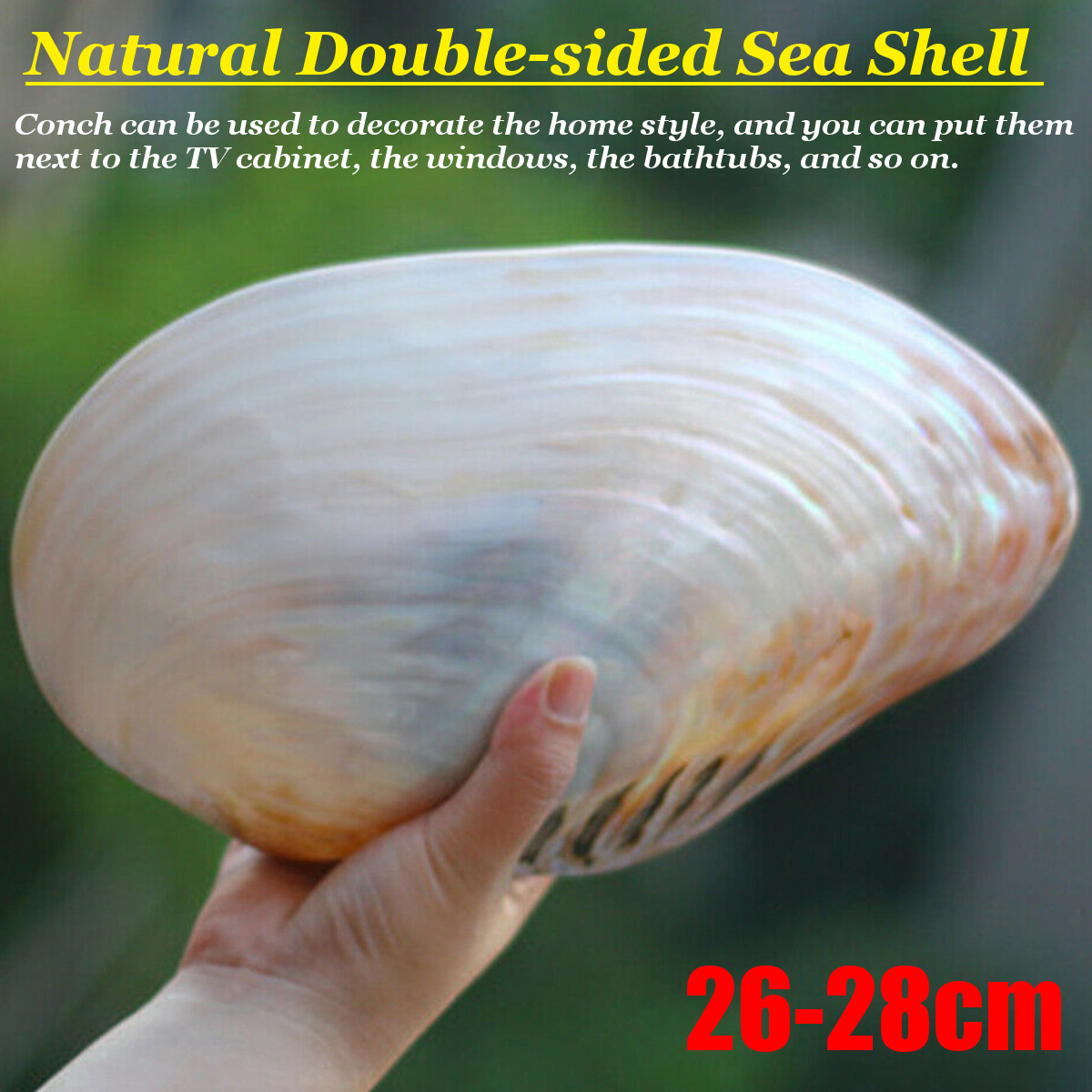 26-28cm Large Natural Conch Shell Coral Pearl Mussel Clam Double-sided Seashell Home Fish Tank Accessories Aquarium Decor New