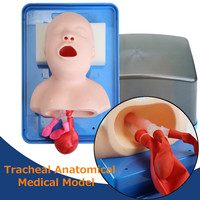 Human Infant Tracheal Medical Science Model School Education Teaching Learning Skeleton Anatomy Model Props Resources Supplies