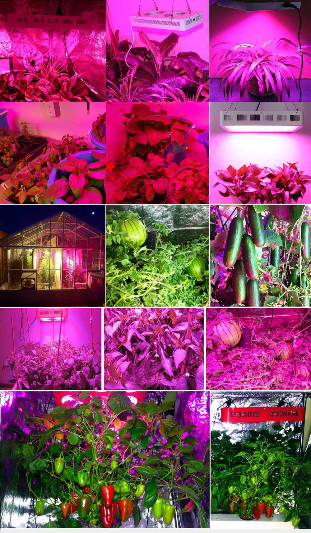 Светодиодный светильник для выращивания kingled, полный спектр, 1200 Вт, для комнатных растений, Фито, лампа, лампа для растения парниковые, growbox, veg, цветение, кормление