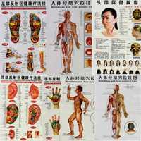 7 pçs/set inglês mão & pé & orelha & corpo meridian pontos de gráfico de parede humana fêmea/masculino acupuntura massagem ponto mapa flipchart