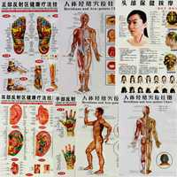 7Pcs/Set English Hand&Foot&Ear&Body Meridian Points Of Human Wall Chart Female /Male Acupuncture Massage Point Map Flipchart