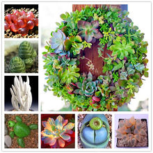 Hot Sale! 100pcs Rare succulent plant flores Lithops Pseudotruncatella Living Stone plantas Home Gardening Flower bonsai plant(China)