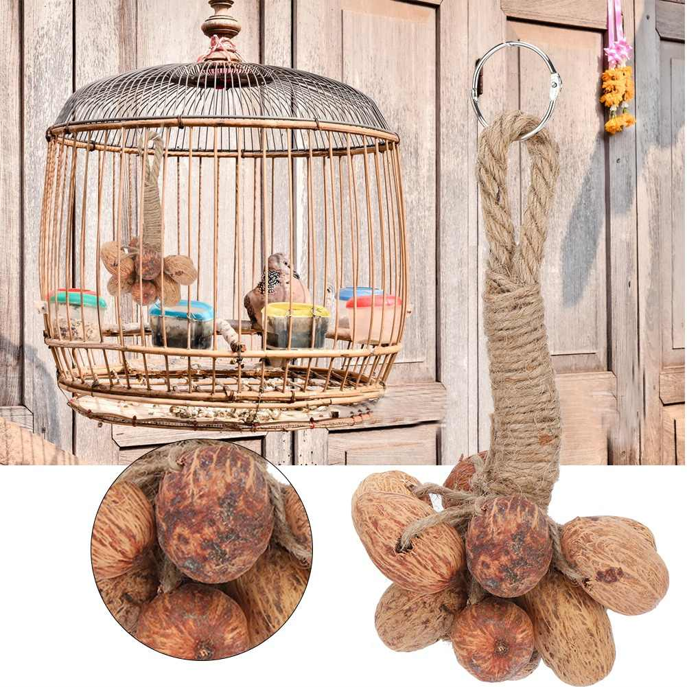 Parrot Toy Natural Fruit Core Toy Hanging Wooden Toy Parrot Playing Toy