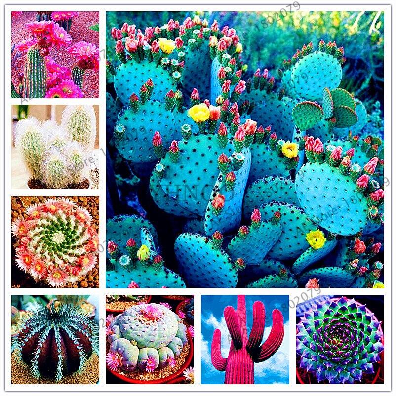 High Germination Big Clearance Sale Brilliant Hot Selling205pcs/bag Mixture Of Cactus Bonsai succulent Plants Flores Forhome And Garden