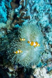 Image 5 - 海 & 海 YS D2J 用 RX100 TG5 一眼レフカメラ水中写真撮影