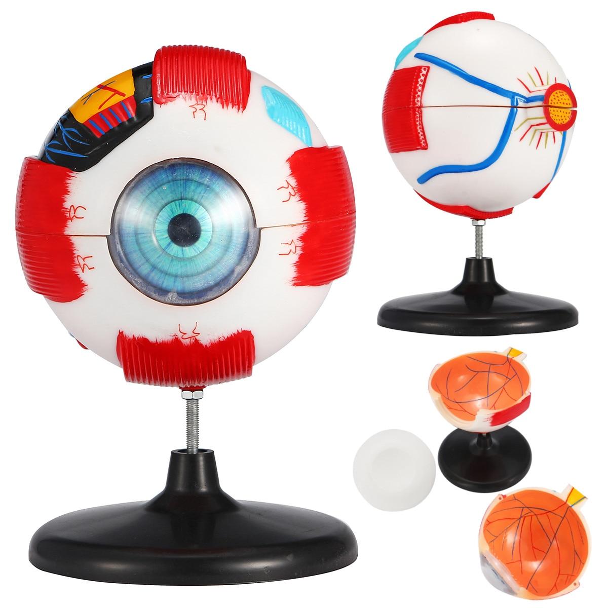 6x Removable Human Eye Eyeball Model Eyeball Internal Structure Learn Human Anatomical Model Lab Teaching Education Specimens|Medical Science| |  - title=
