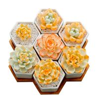 Planter Pots Indoor 7 Pack Modern White Ceramic Small Hex Succulent Cactus Flower Plant Pot with Bamboo Tray for In