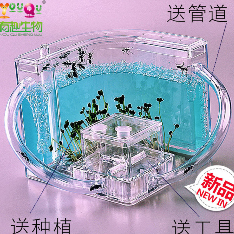 Pet Ant Farm Pet Villa Home Queen Workshop Reptile Ant Nest Transparent House Ecological Insect Farm Ants Supplies