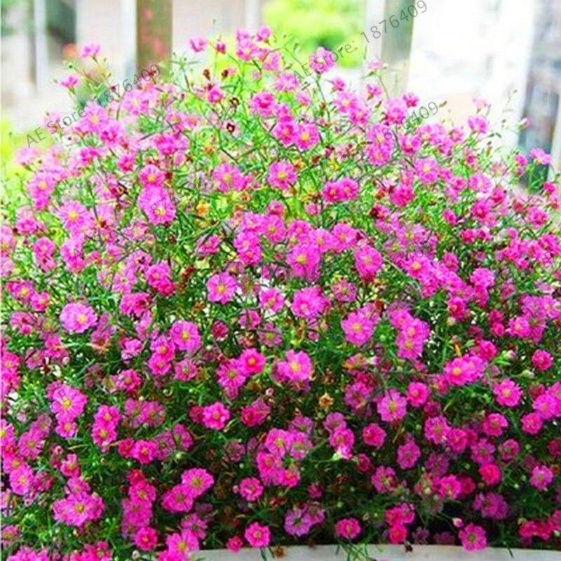 Лидер продаж! 100 шт./пакет Гипсофила метельчатая карликовые деревья, красивые цветочные растения, декоративные цветы для дома и сада, # A6NE9F