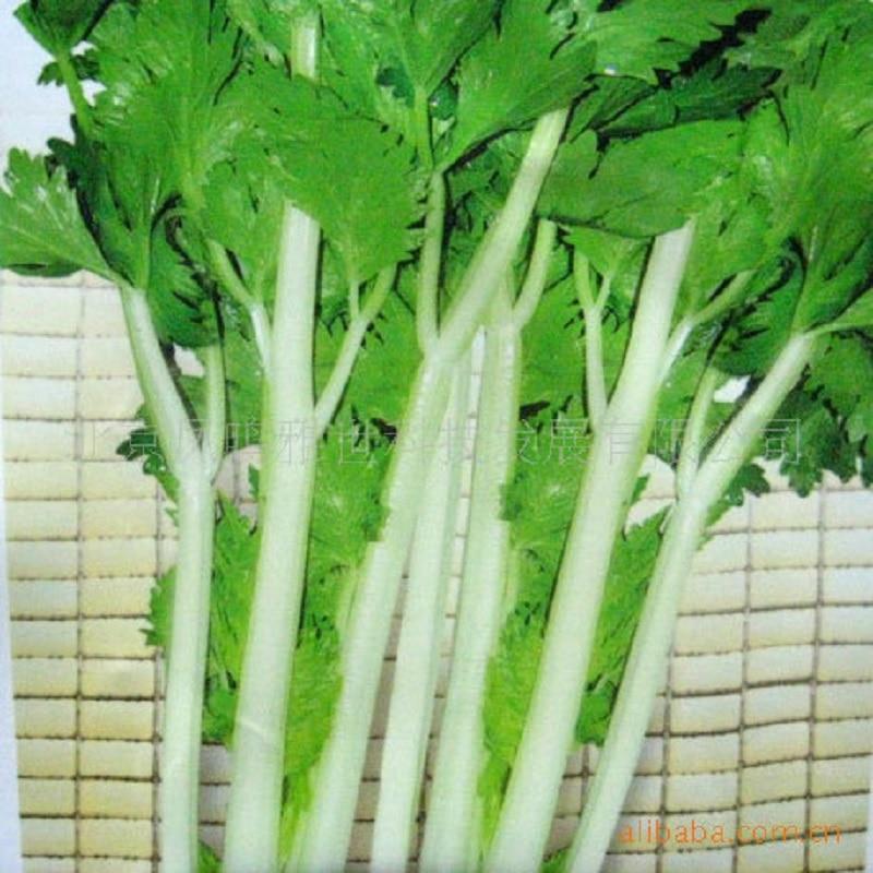 Белый сельдерей бонсай горячий шт. 100 шт овощей бонсай