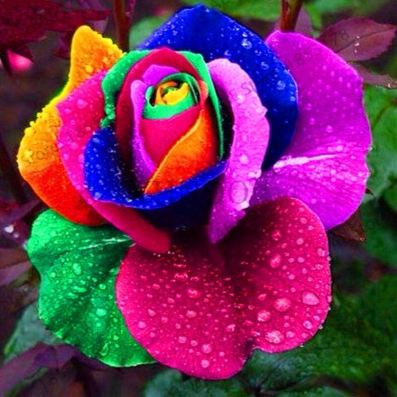 буддийские картинки очень красивые и необычные цветы тут такое дело