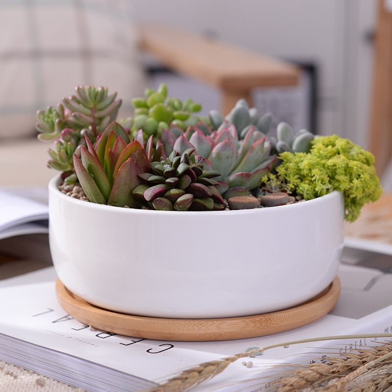 1 Set Minimalist White Ceramic Succulent Plant Pot Porcelain Deep Rounded Pot Desktop Pot Zakka Home Office Decor  1 Pot +1 Tray