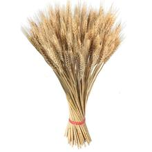 100PCS Natural Wheat Dried Flowers Primary Colors Garden Organic Real Wedding Decor Boutonniere Headpieces Woven Wreath J2
