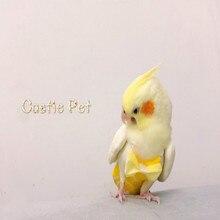 Новые модели пеленок для попугая, одежда для салфеток ручной работы, штаны с птицами, милый Летающий костюм для Cockatiel Sun Parakeet Africa Gray Macaw