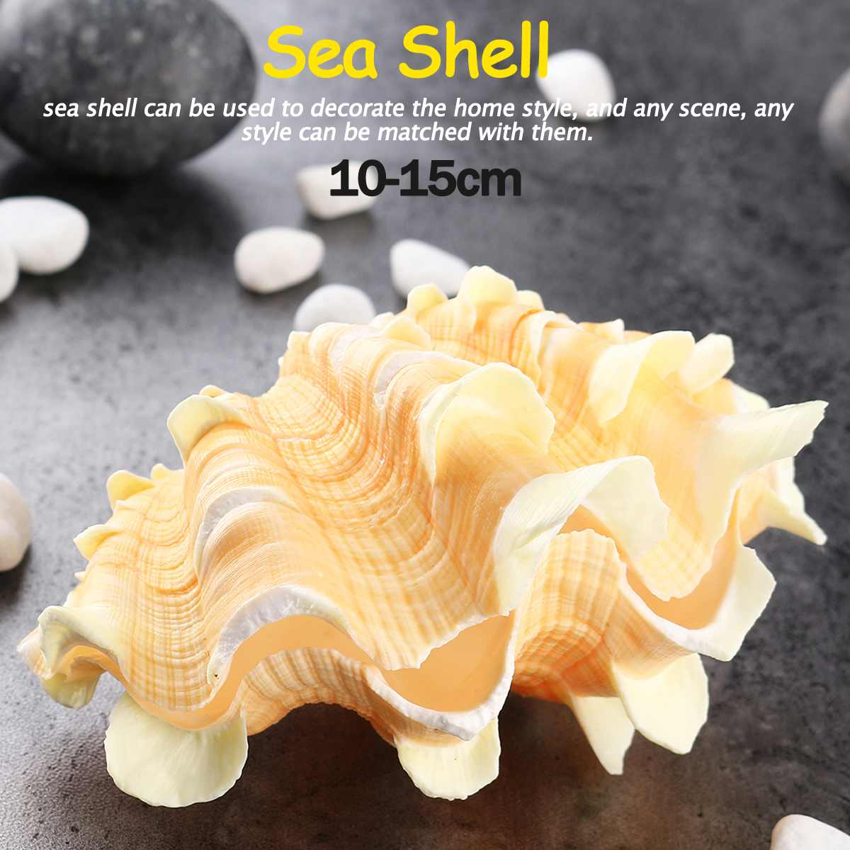 10-15cm Home Furnishing Marine Sea Decoration Big Conch Shell Natural Ornaments  Wedding/Festival/Party Decor Gift Home Decor