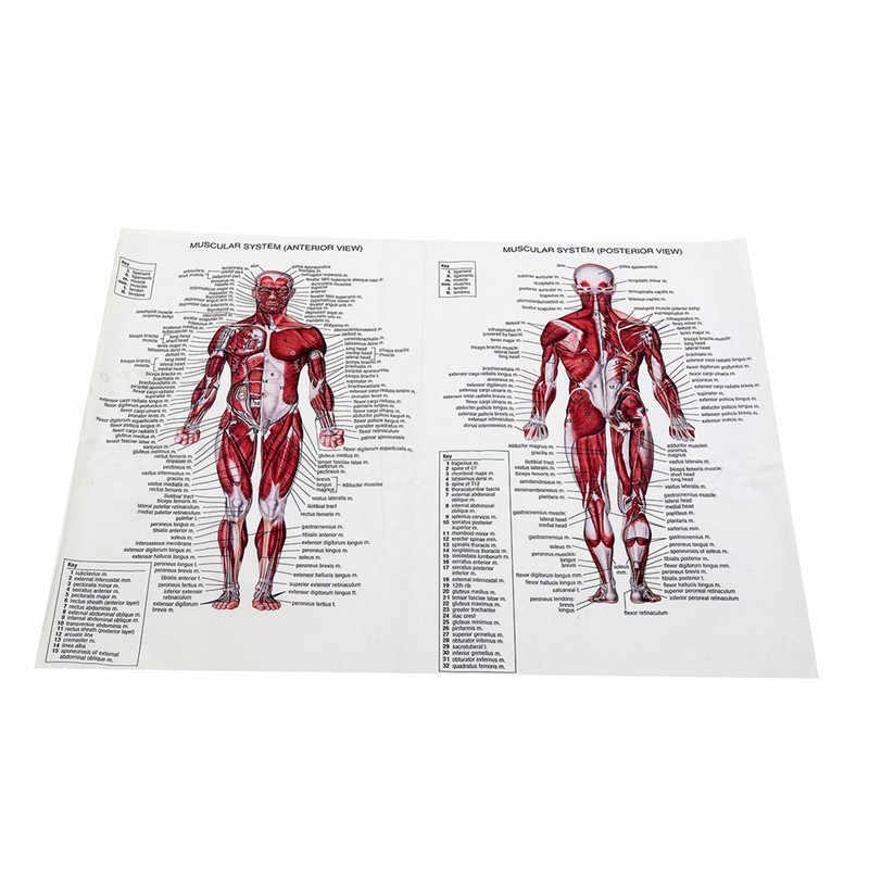 60 cm * 80 cm שרירים מערכת כרזות משי בד האנטומיה תרשים אדם גוף בית ספר רפואי מדע חינוכי אספקת עיצוב הבית