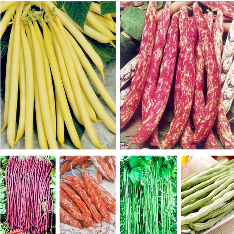 Продажа 5 шт бонсай Bean вкусные овощи фасоль обыкновенная завод зеленый бобы естественно роста здоровых Еда сад Планта