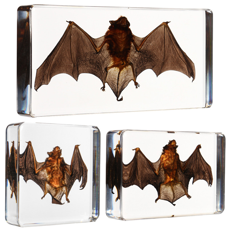 3 tamaño acrílico Lucite transparente bate especímenes animales insectos taxidermia bate ámbar educativos enseñar de colección biológica