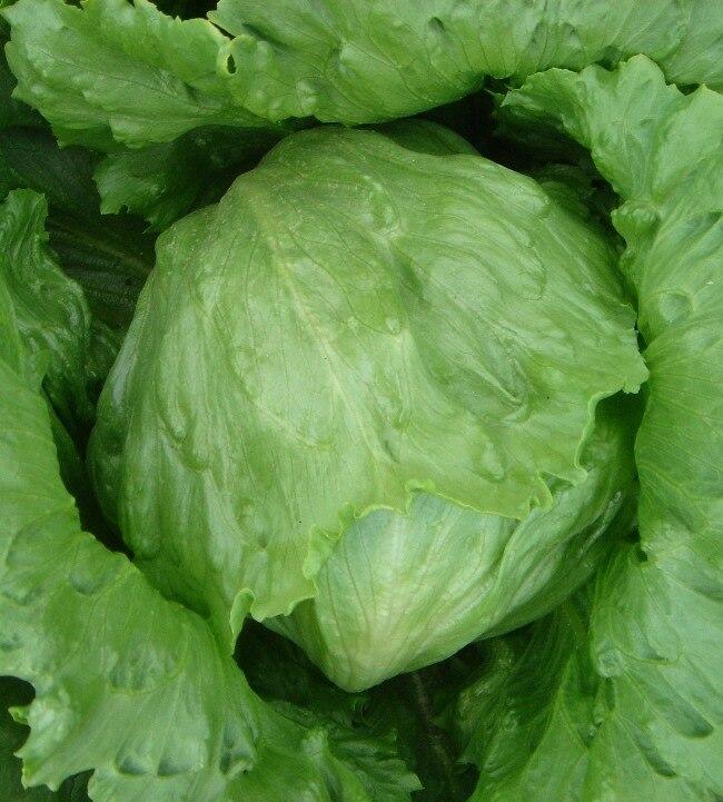 Манли салат bonsais 200 шт.