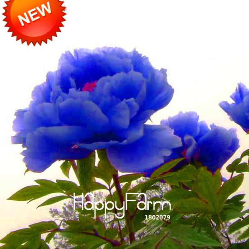 Baru Cina Peony Bonsai Ungu Biru Spesies Langka Peony Bunga Taman 10 Pieces/bag # OC1ULC