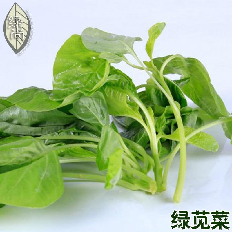 Amarant groene gezondheid speciale gerechten eenvoudige soorten tuin groenten ingemaakt op het balkon bonsais 100 stks.