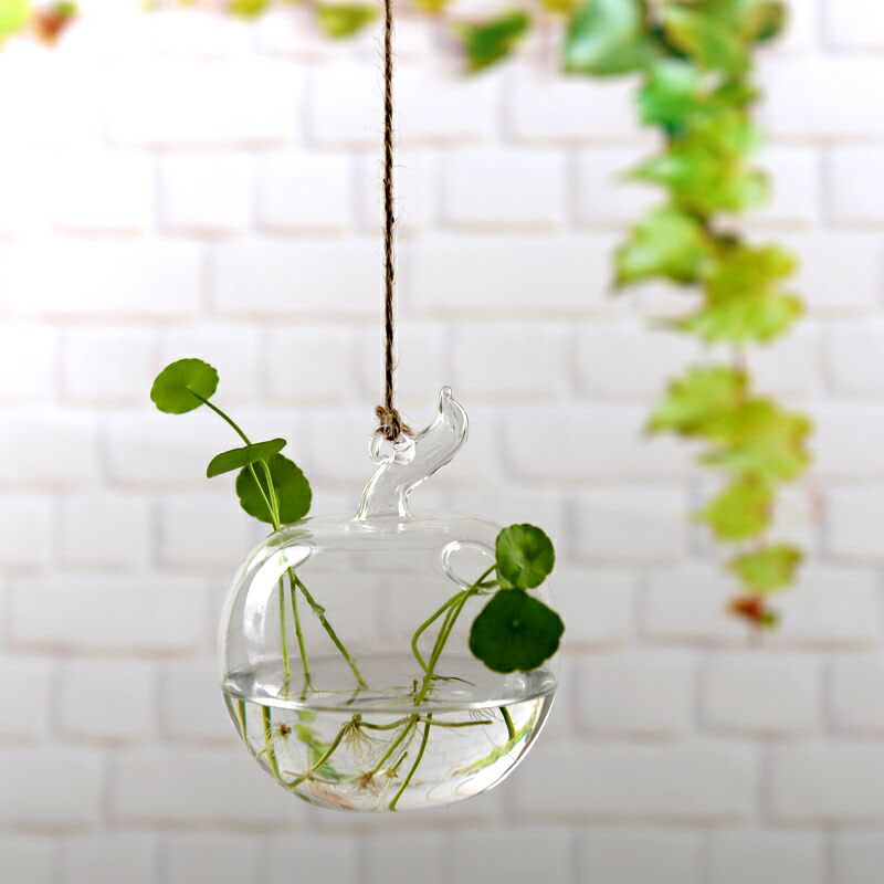 Clear Terrarium with Rope Made with Borosilicate Glass Ideal for Bedroom/Living Room and Office