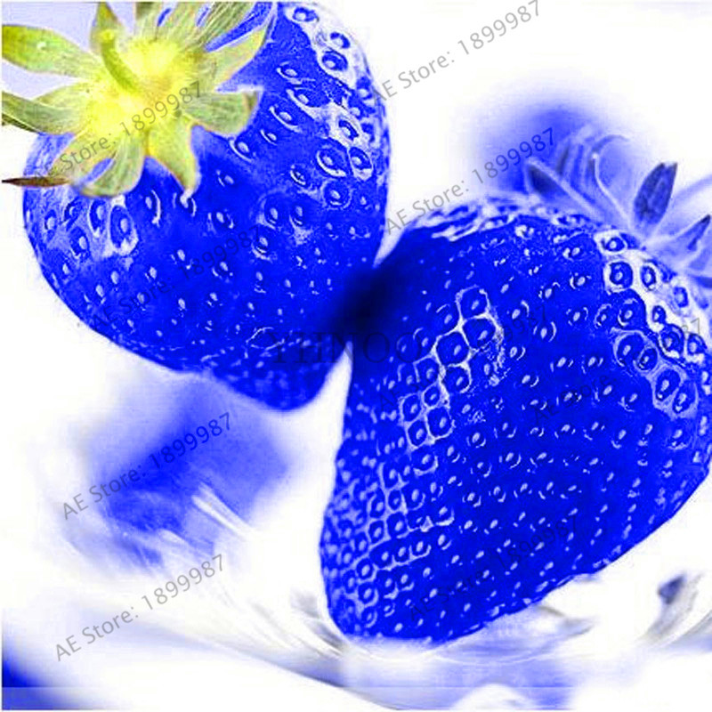 Promotion!500Pcs Sweet Blue Strawberry Bonsai Fruit Vegetable Garden Edible Nutritious Plant Plantas Sweet & Juicy Indoor Balco