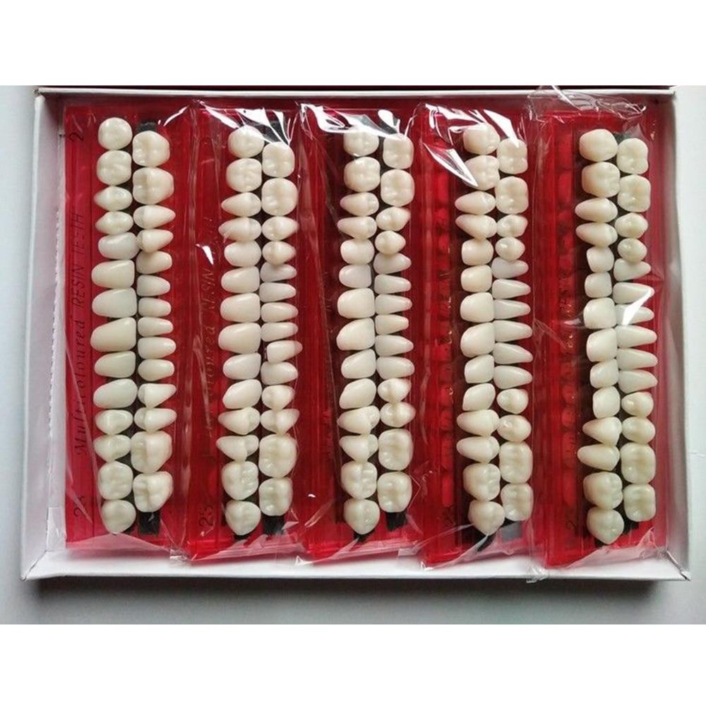 10sets Pro Dental Material Plastic Teeth Teaching Model Dedicated Teeth Dental Material Useful Teeth Care Tool A2 Type