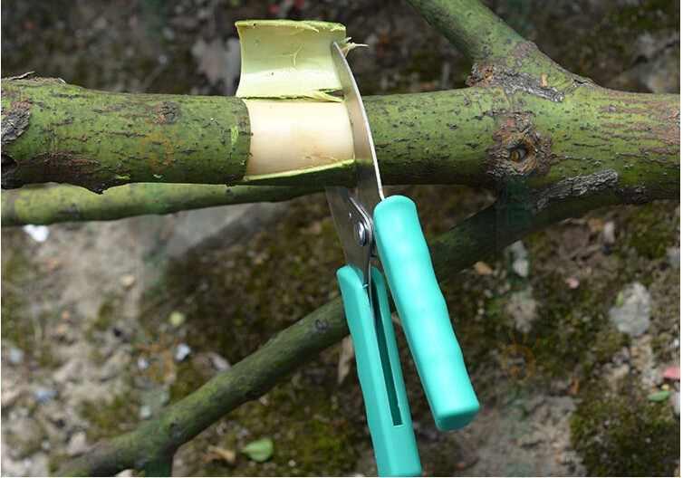 Cincin Menggonggong Cutter Scissor Girdling Cherry Pemangkasan Pisau Taman Buah Pohon Anggur Alat Semak Orchard